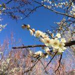 春を感じる自然の中へ